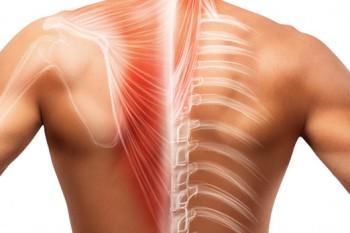 Курсы анатомии для массажистов и реабилитологов - 16 часов