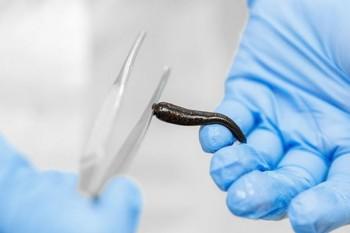 Современные методики клинической гирудотерапии - 144 часа